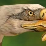 DESPERADO - EAGLES