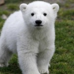 Adotta anche tu l'orso per uscire dall'autoreclusione